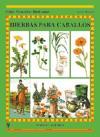 Hierbas-para-caballos--Guias-ecuestres-ilust---i0n174298