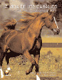 La-vida-de-los-caballos-de-Jane-Holderness-Roddam