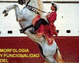 VIDEO-Morfologia-y-funcionalidad-del-caballo-de-P.R.E.