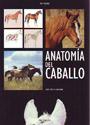 anatomiaDelCaballo