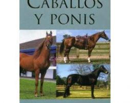 caballosyponis